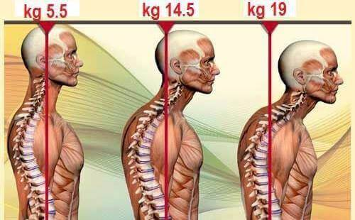 posture evolution