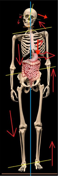 starecta organs