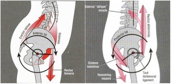 buttocks natural
