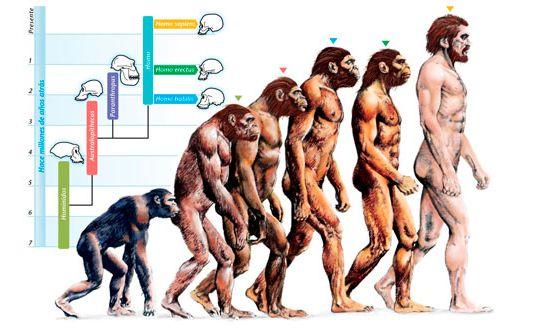 evoluzione-umana-molari