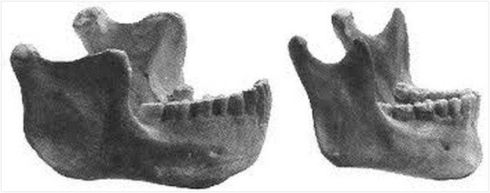 human evolution arches