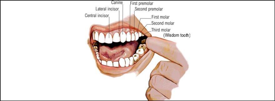 molars starecta
