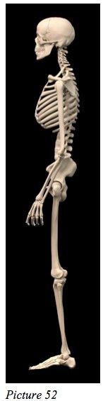 body structure starecta