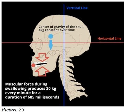 skull ideal posture