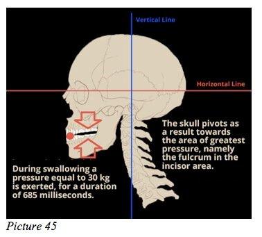 skull starecta jaw