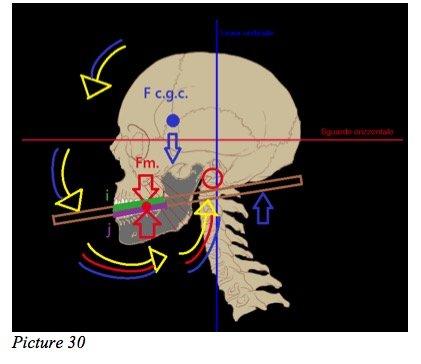 skull starecta theory
